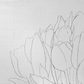 2009 - Tulipes - crayonné