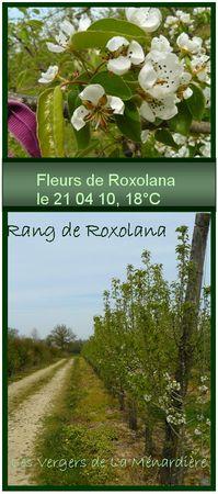 roxolana_2104