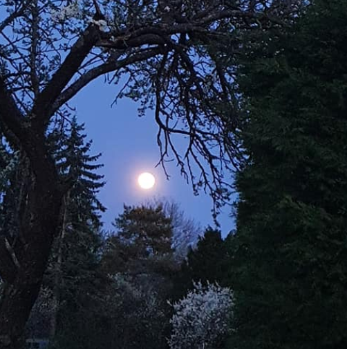 lune&