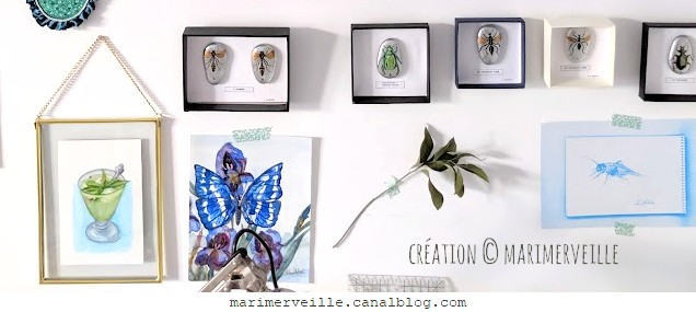 collection galets d'entomologie - mur atelier -creations marimerveille