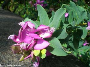 9154_Arbuste_fleur_mauve