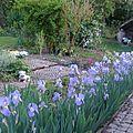 bordure d'iris devant la maison