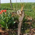 Un ami au jardin
