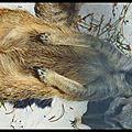 Le suricate 5