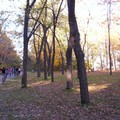 Mont royal 21oct 039