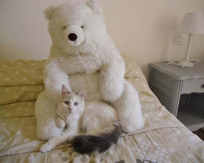kitty et nours