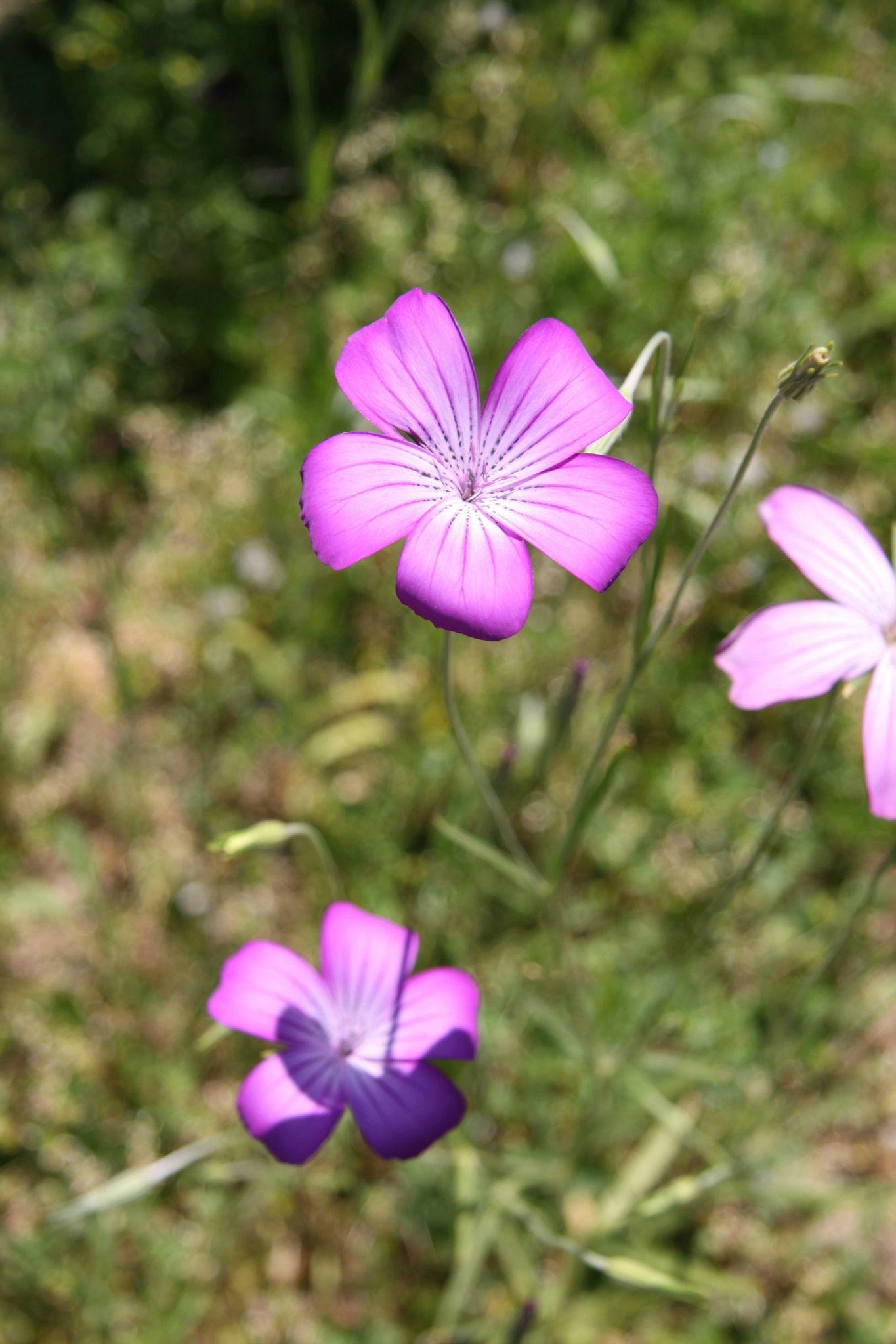 fleur nathalie dentzer