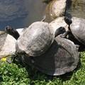 parc des tortues