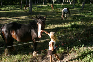 chevaux_Mad__t__2009