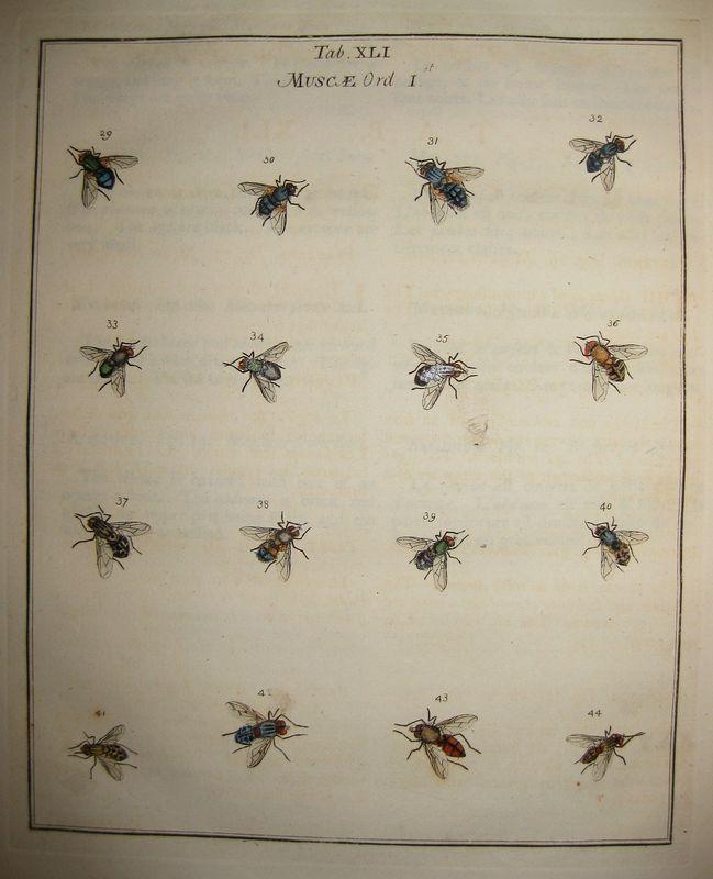 planche d'insectes 2