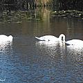 Balade au Lac 171118-001