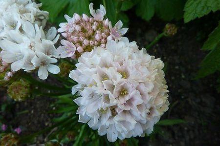 jardin mai 2013 (6)