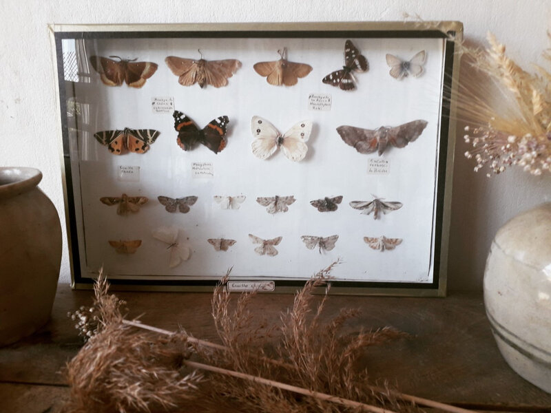 Collection papillons