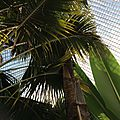 Bicton Park Palm House 02