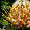 Fleur etrange