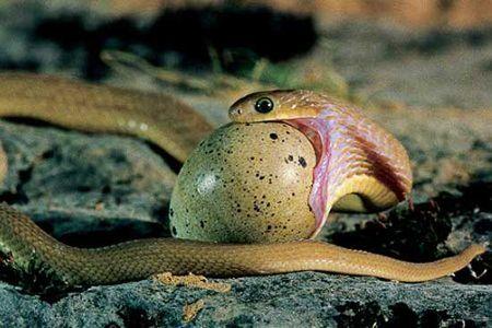 genesis_serpent