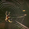 araignée mont césar4