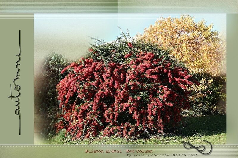 Automne_rouge_900