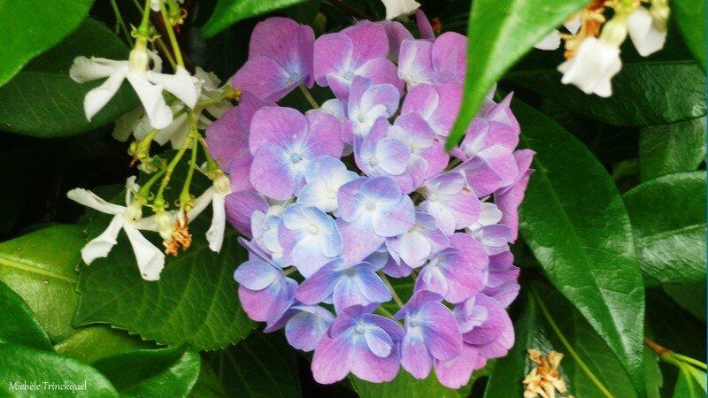 Fleurs de Leon 24061640