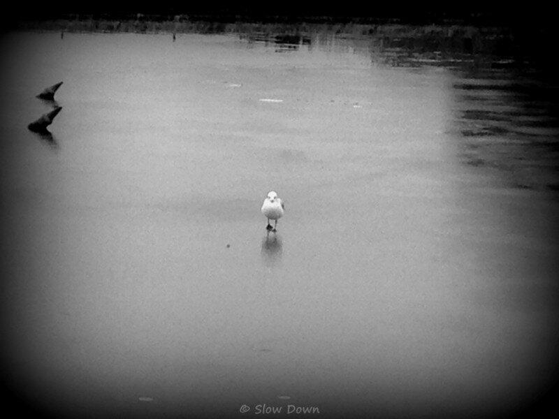 Versailles Oiseau sur la glace