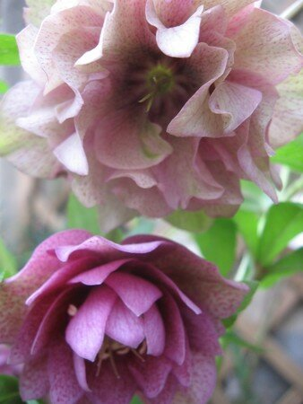 fleur_en_hiver_007