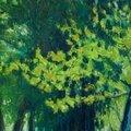 arbres de printemps pastel à l'huile, 65 x 50 cm encadré