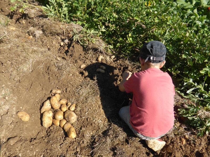 21-pommes de terre (29)