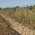 Extension de la parcelle des femmes de n'tiobougou