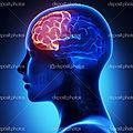 C'est prouvé scientifiquement : le devant de la tête ment !