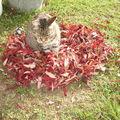 Tapis douillet de feuilles, ma foi ....