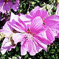 Fleurs de Léon 010718-001