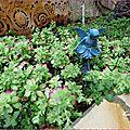 succulentes jeannine 2016 1