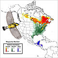 Magnolia Warbler distribution in North America