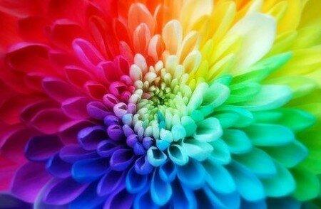 la_vie_en_couleur