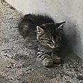 chatte et ses 2 chatons largués sur un port Nord BT 2