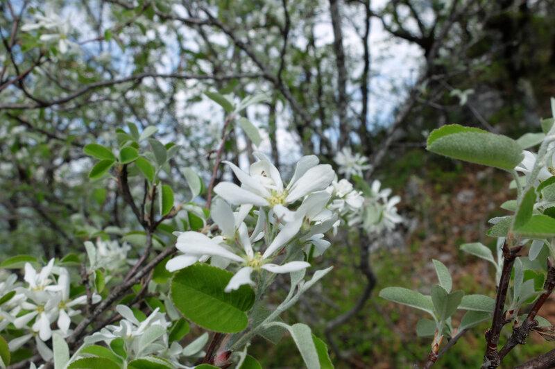fleurs blanches1