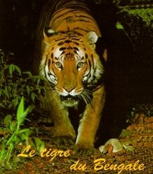 Tigre copieweb