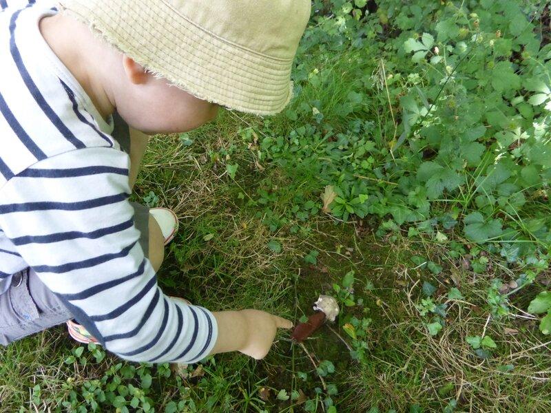 14-aaron, la limace et le champignon (2)