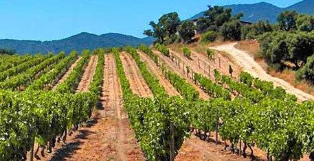 vins-clos-canarelli-figari