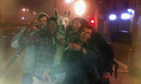 Serge-the-llama-008