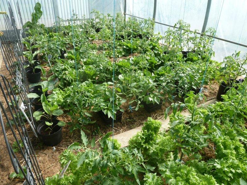 3-tomates (3)