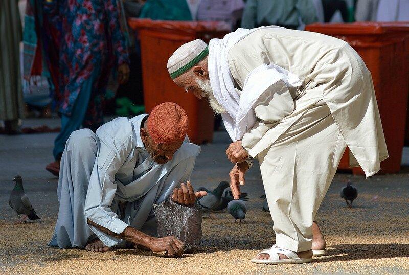 pigeons à la Mecque 2