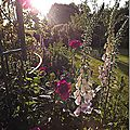 Windows-Live-Writer/jardin_6BD4/DSCF3611_thumb