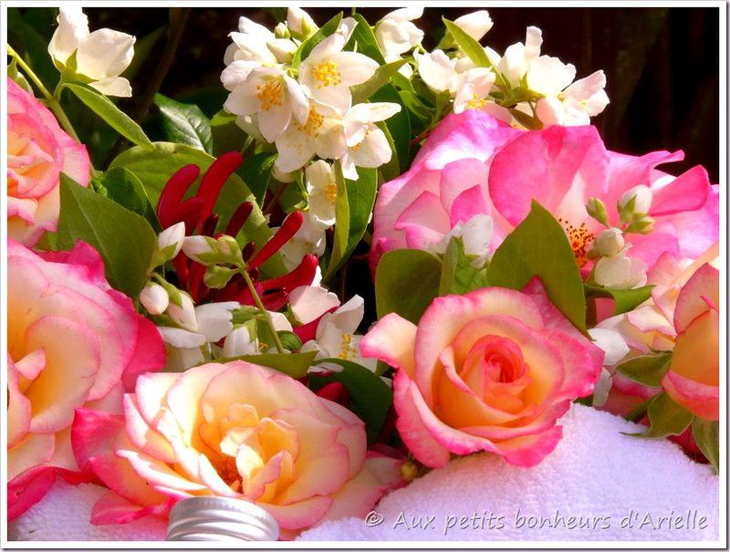 Eau de rose (12)