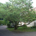 Front of our house, Judee Tree