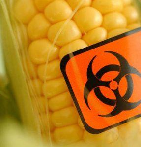 OGM danger