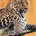 leopardzn1d71E1s6f84po1_1280