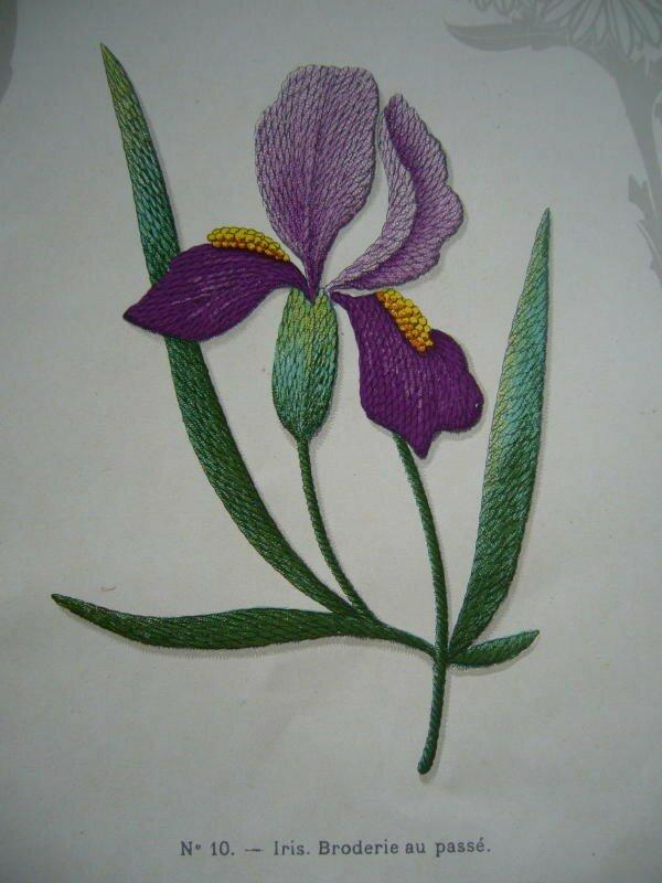Iris. Broderie au passé