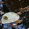 2011_11_15-POM-P1060471