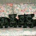 4 petits noirauds